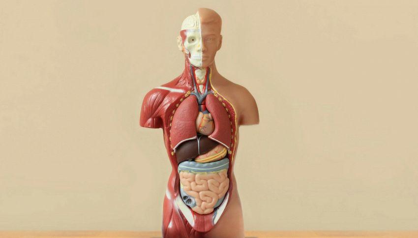 Queste 6 parti del corpo spariranno a brevissimo