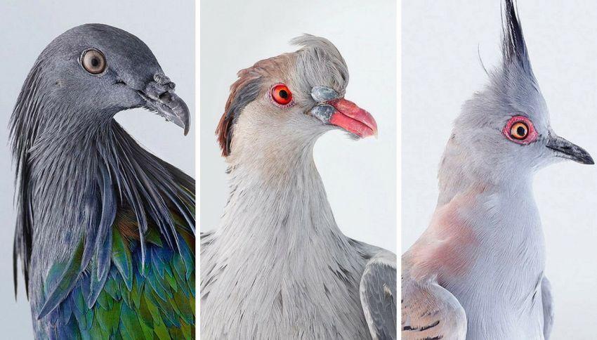Il discreto fascino dei piccioni