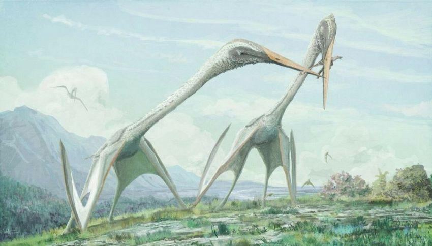 Nella preistoria c'era una mega cicogna più grande del T-Rex