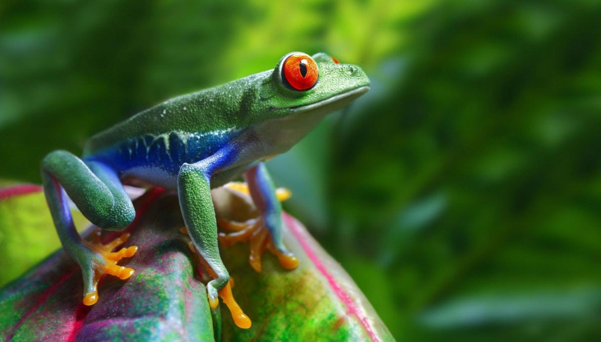 Un test di gravidanza ha causato una catastrofe tra le rane