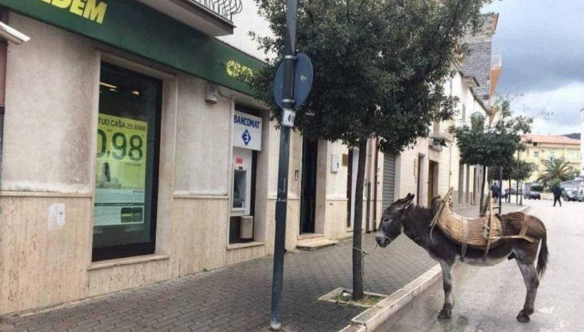 Il tizio che parcheggia l'asino davanti alla banca batte tutti