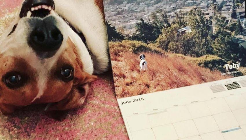 Addio ai calendari sexy, arrivano i cani che fanno la cacca