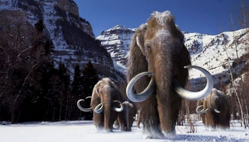 Uno scienziato vuole riportare in vita i Mammut