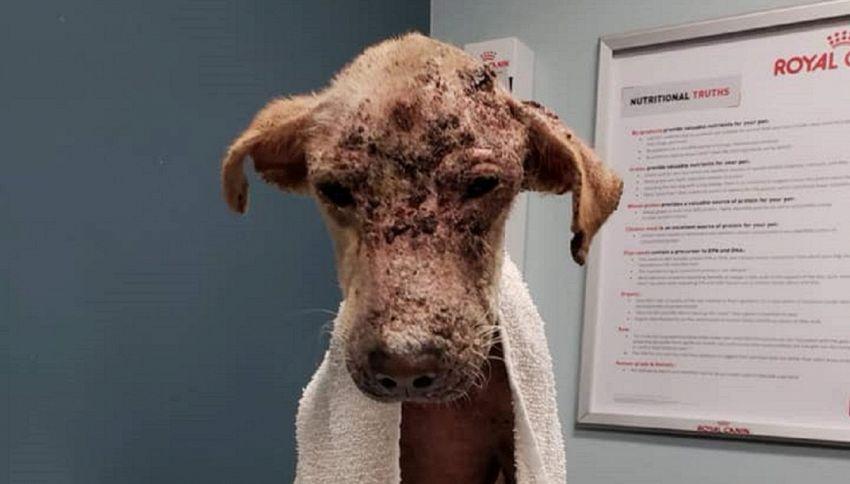 Il recupero di questo cucciolo ha commosso e stupito tutti
