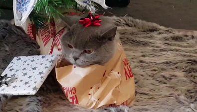 Natale: il gattino si lascia impacchettare come un pacco regalo