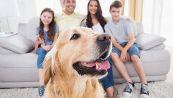 Detrazione spese per animali di compagnia