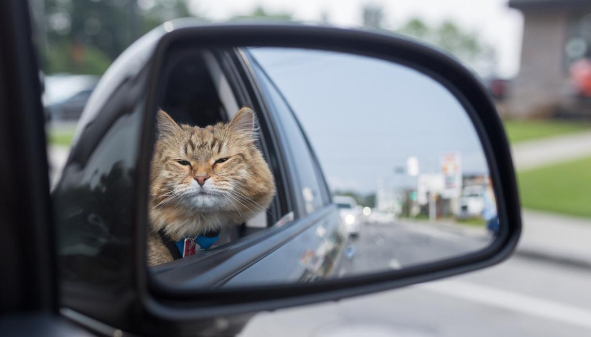 Strano ma vero: gatto si perde ma poi torna a casa con BlaBlaCar