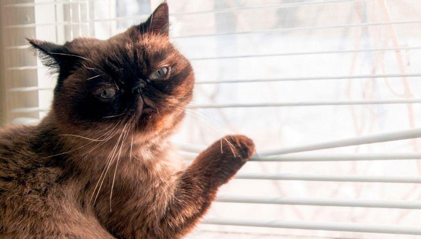 """Anche i gatti """"parlano"""", basta capirli: il loro alfabeto"""