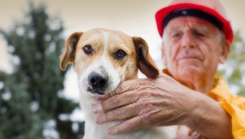Cosa non si fa per il proprio cane: ecco cosa fa l'eroico padrone