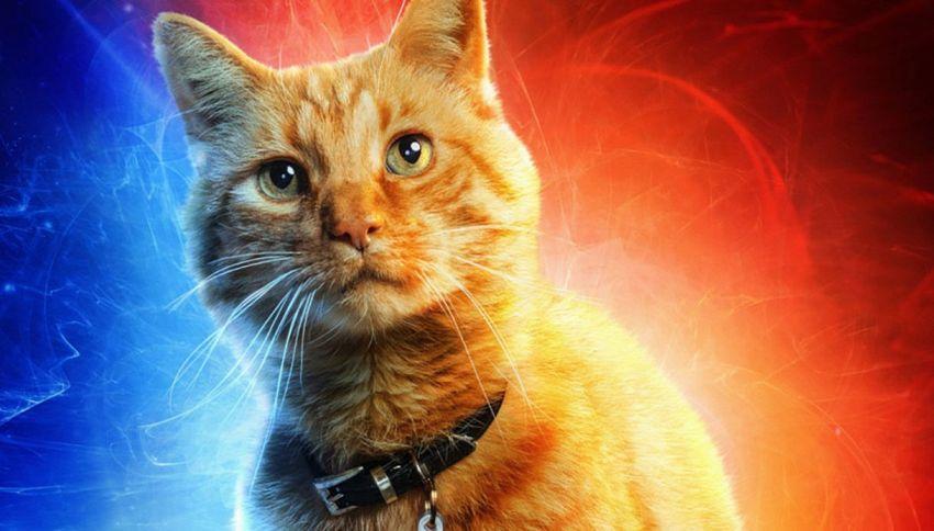 Chi è Goose, il gatto di Captain Marvel