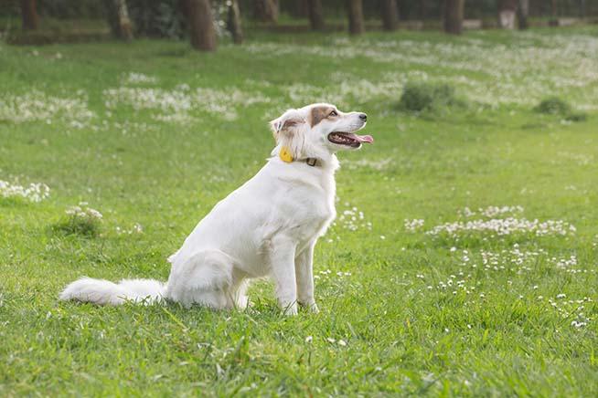 Premi sull'immagine per scoprire FinsterDuo, il fitness tracker intelligente per cani