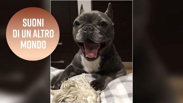 Il cagnolino con 10.000 follower su Instagram