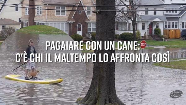 Pagaiare con un cane: incredibile scena in New Jersey